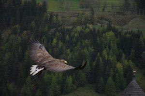 soul - eagle